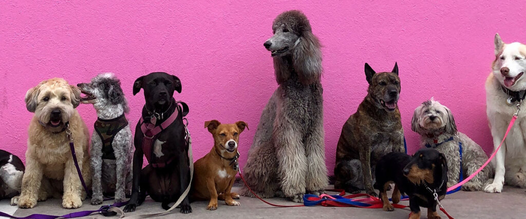 A group of dogs sitting in front of a pink wall